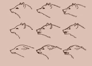 An illustration displaying many expressions of fear and aggression in a dog, from Darwin's The Expression of the Emotions in Animals and Man.