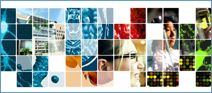 A collage of 8 images from the Brain and Cognitive Sciences Website, divided by a white grid.
